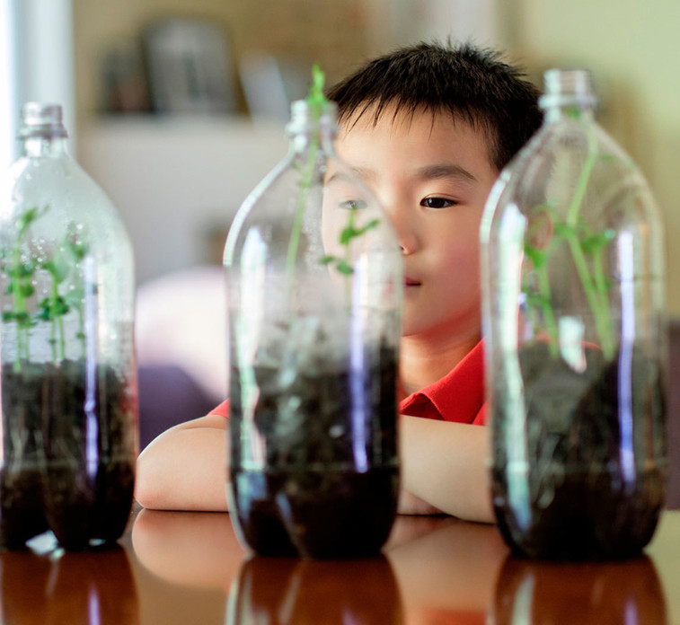 Kid watching plants grows into plastic bottles